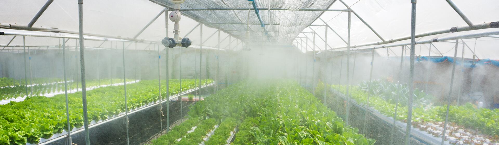 post_harvest_mist_fog_banner